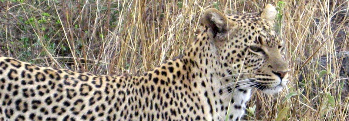 Fantastic safaris ...